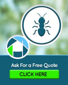 Pest Inspections Quote